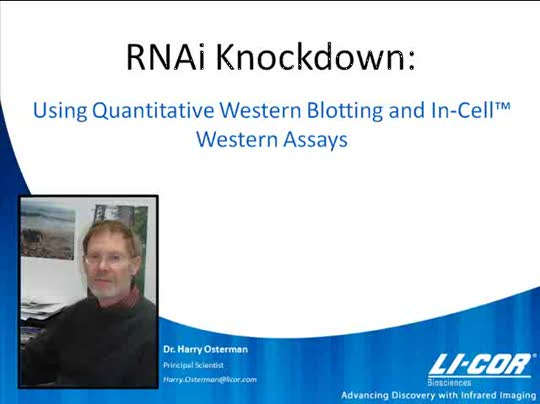 RNAi Knockdown using Quantitative Western Blotting and In-Cell Western™ Assays and Analysis